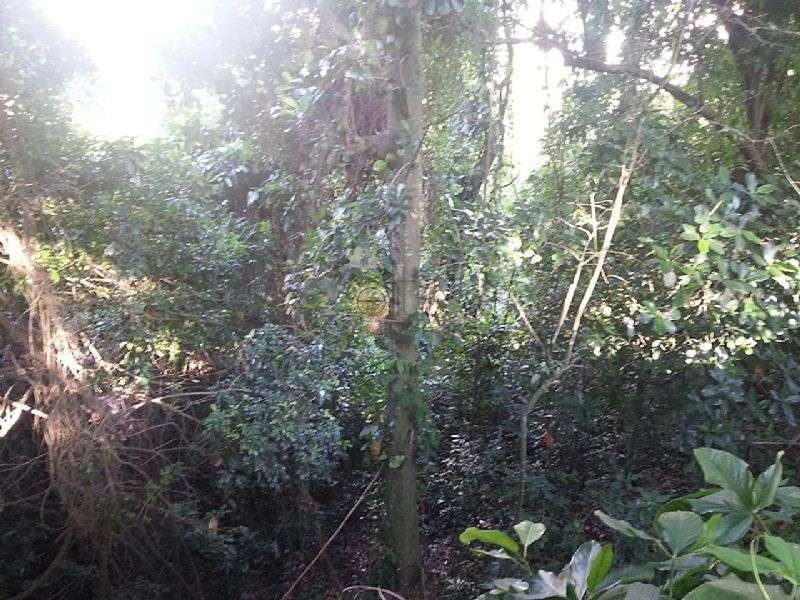 FOTO5 - Terreno À Venda no Condomínio Pedra Bonita - São Conrado - Rio de Janeiro - RJ - 80028 - 6