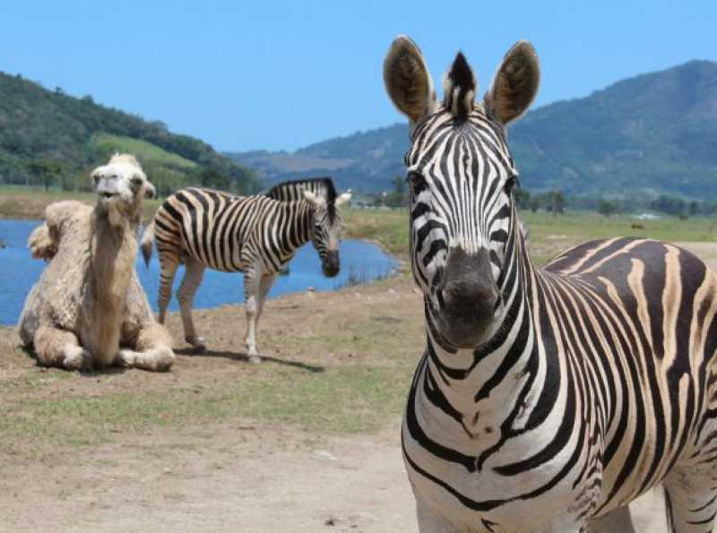 24 - Fachada - Portobello Resort & Safari - 158 - 24