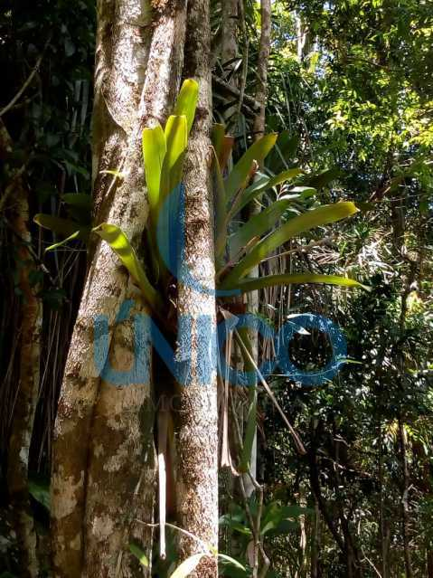 01. - Vendo Sítio no Humaitá com várias nascentes e árvores frutíferas - MTSI00001 - 1