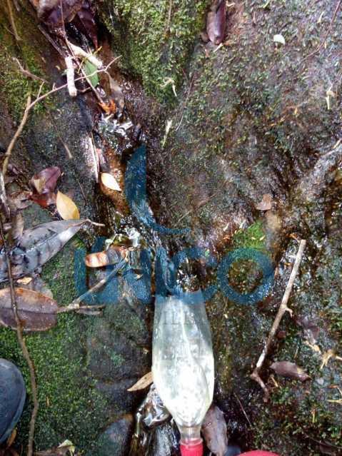 02. - Vendo Sítio no Humaitá com várias nascentes e árvores frutíferas - MTSI00001 - 3