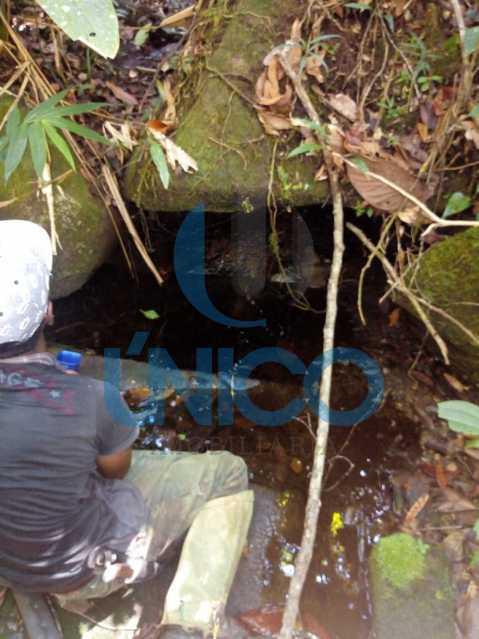 04. - Vendo Sítio no Humaitá com várias nascentes e árvores frutíferas - MTSI00001 - 5