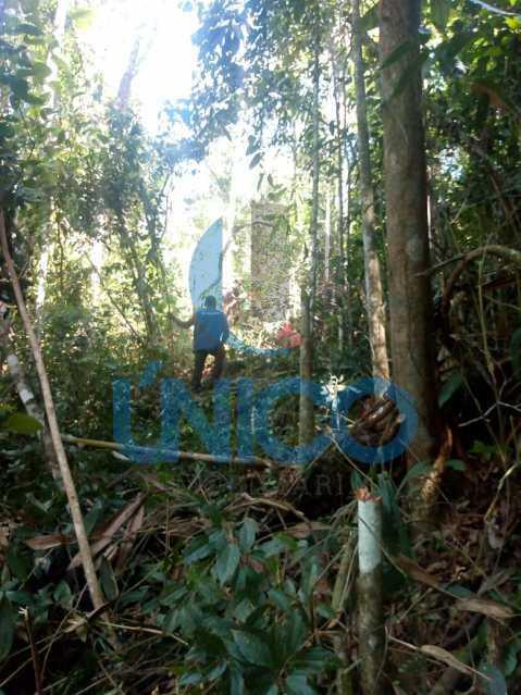 05. - Vendo Sítio no Humaitá com várias nascentes e árvores frutíferas - MTSI00001 - 6