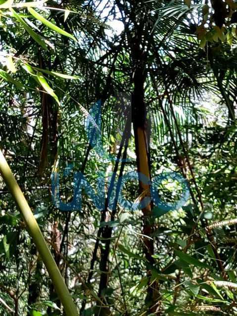 06. - Vendo Sítio no Humaitá com várias nascentes e árvores frutíferas - MTSI00001 - 7