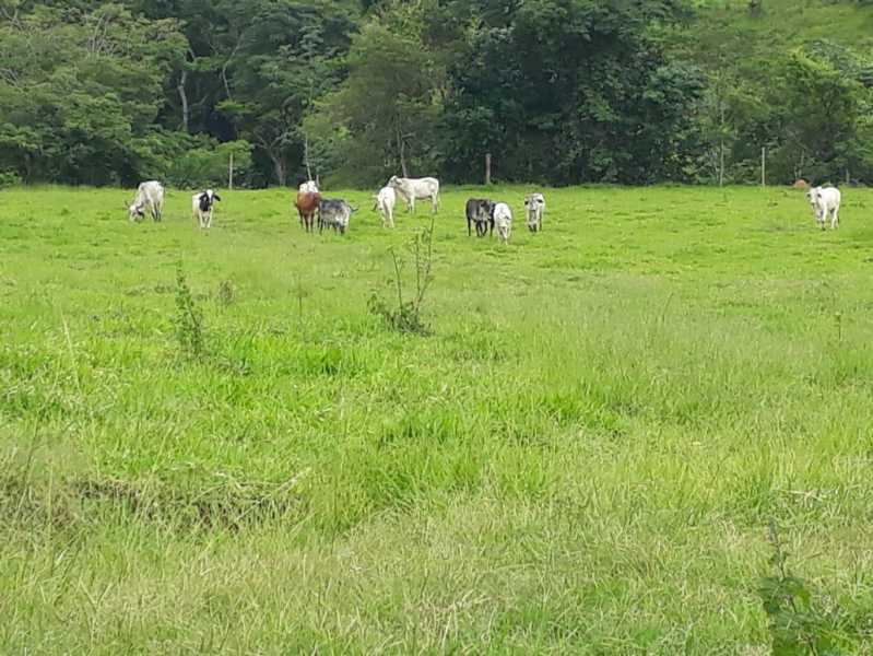 unnamed 5 - Fazenda à venda Piraúba, Muriaé - R$ 2.000.000 - MTFA00001 - 6