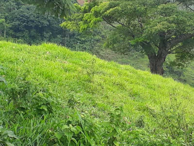 unnamed 6 - Fazenda à venda Piraúba, Muriaé - R$ 2.000.000 - MTFA00001 - 7