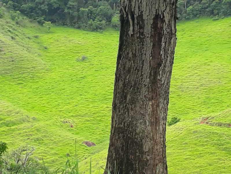 unnamed 8 - Fazenda à venda Piraúba, Muriaé - R$ 2.000.000 - MTFA00001 - 9