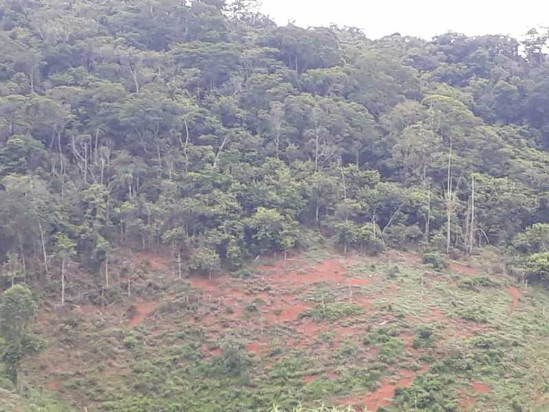 unnamed 9 - Fazenda à venda Piraúba, Muriaé - R$ 2.000.000 - MTFA00001 - 10