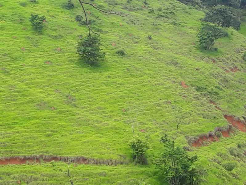 unnamed 12 - Fazenda à venda Piraúba, Muriaé - R$ 2.000.000 - MTFA00001 - 13
