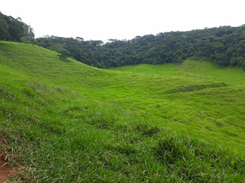 unnamed 13 - Fazenda à venda Piraúba, Muriaé - R$ 2.000.000 - MTFA00001 - 14