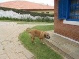 FOTO32 - Casa em Condomínio 3 quartos à venda Itatiba,SP - R$ 790.000 - VICN30009 - 34