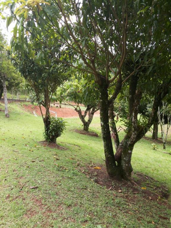 FOTO11 - Chácara à venda Itatiba,SP - R$ 480.000 - CH0367 - 13