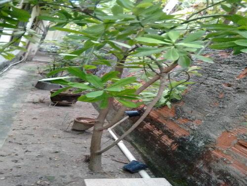QUINTAL LATERAL - Casa Taquara,Rio de Janeiro,RJ À Venda,3 Quartos,160m² - PR30387 - 4