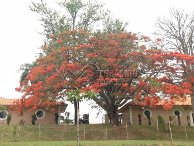 Árvore - Fachada - Condomínio Sete Lagos - 15 - 8
