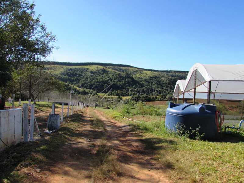 Plantações - Sítio 240000m² à venda Rodovia Dom Pedro I,Itatiba,SP - R$ 4.500.000 - FCSI40003 - 7