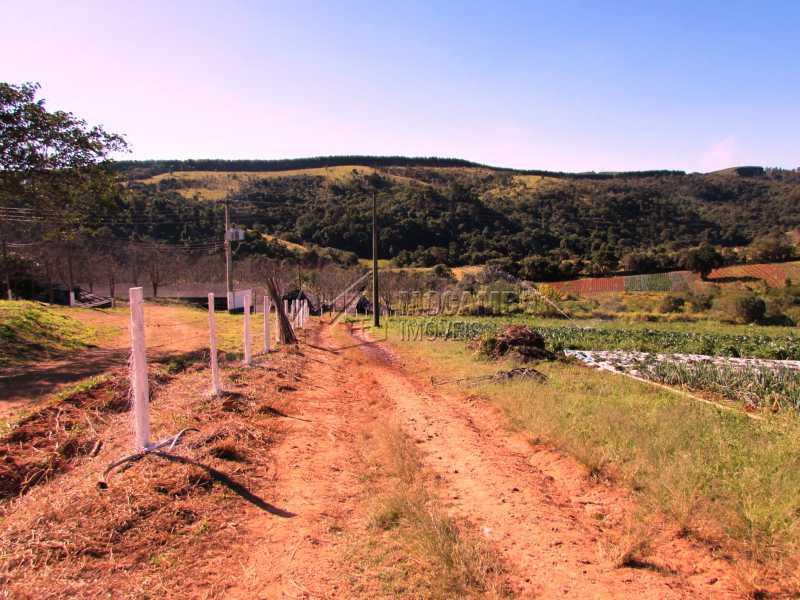 Plantações - Sítio 240000m² à venda Rodovia Dom Pedro I,Itatiba,SP - R$ 4.500.000 - FCSI40003 - 14