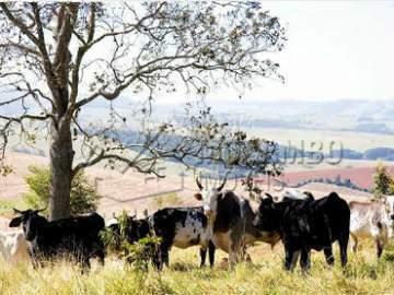 Pastagens - Fazenda 968000m² à venda Morungaba,SP - R$ 13.000.000 - CF90001 - 1