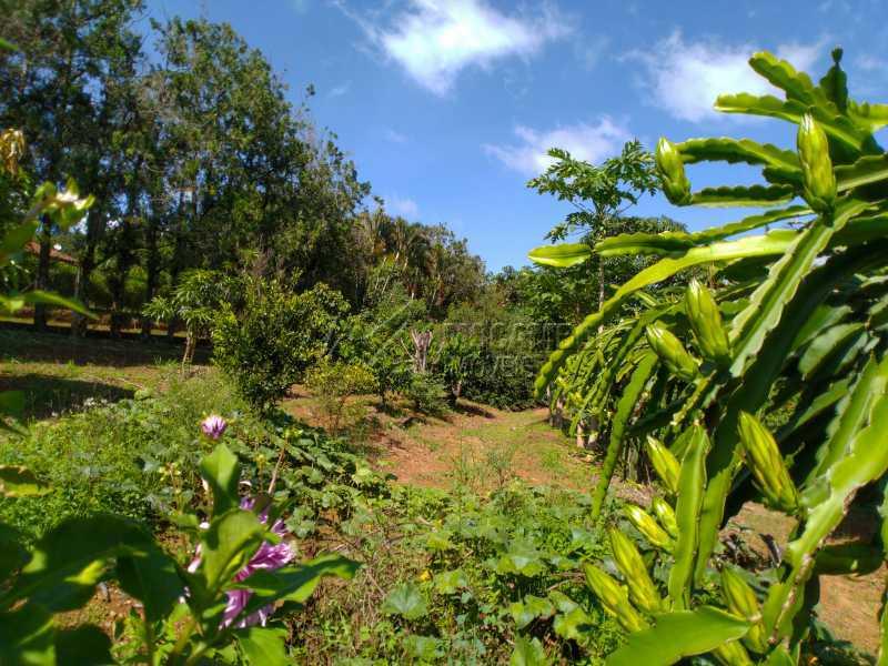 Pomar - Chácara 2000m² à venda Itatiba,SP - R$ 690.000 - FCCH30119 - 16