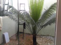 FOTO10 - Casa à venda Avenida Desembargador Eládio de Amorim,Parque Veiga Jardim, Aparecida de Goiânia - R$ 180.000 - CA0139 - 11