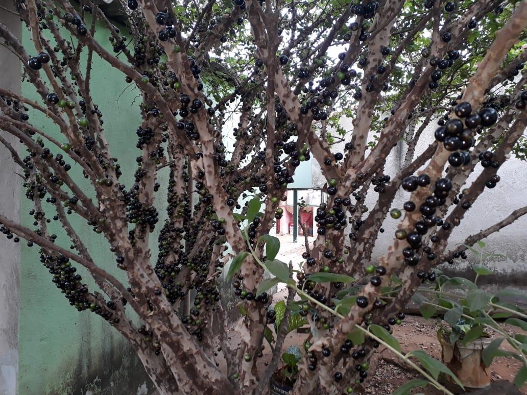 FOTO21 - Casa à venda Rua dos Tucanos,American Parque, Aparecida de Goiânia - R$ 135.000 - CA0272 - 23