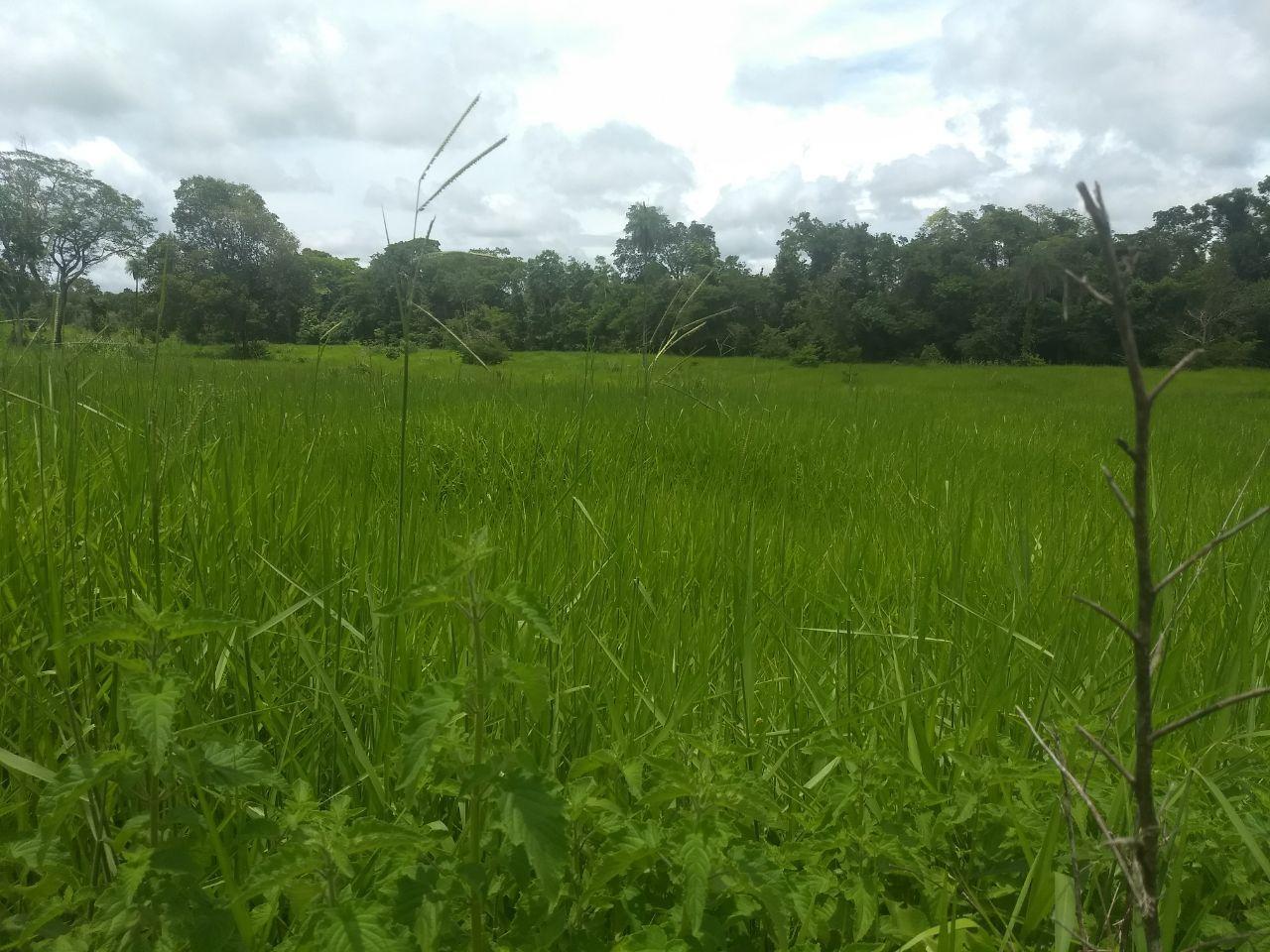 FOTO1 - Fazenda à venda Rua Logradouro Sem Nome,Zona Rural, Vila Propício - R$ 10.000.000 - FA0001 - 3