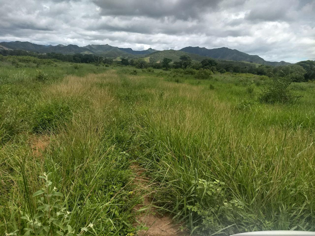 FOTO17 - Fazenda à venda Rua Logradouro Sem Nome,Zona Rural, Vila Propício - R$ 10.000.000 - FA0001 - 19