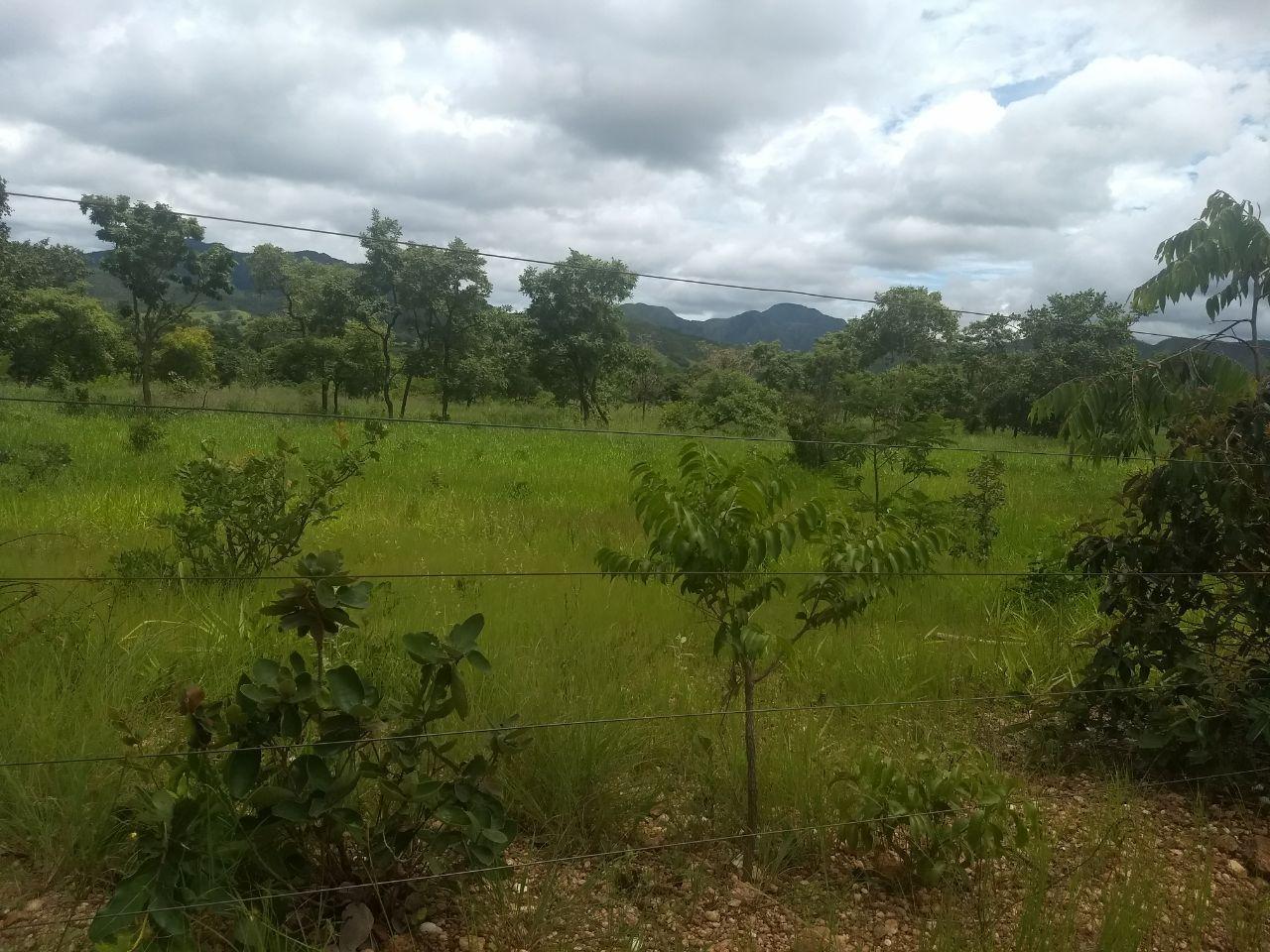 FOTO2 - Fazenda à venda Rua Logradouro Sem Nome,Zona Rural, Vila Propício - R$ 10.000.000 - FA0001 - 4