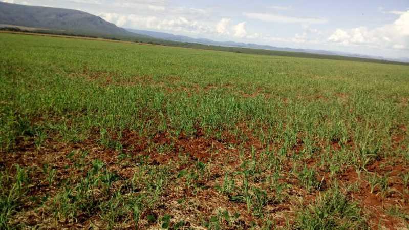 WhatsApp Image 2021-09-13 at 0 - Fazenda à venda Zona Rural, Vila Propício - R$ 40.000.000 - VIFA00001 - 1