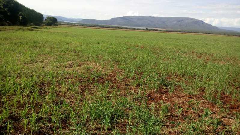 WhatsApp Image 2021-09-13 at 0 - Fazenda à venda Zona Rural, Vila Propício - R$ 40.000.000 - VIFA00001 - 7