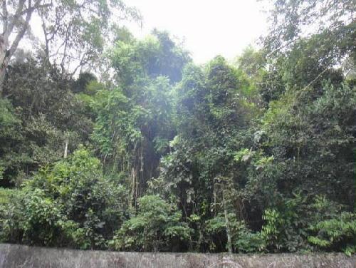 FOTO1 - Terreno 10700m² à venda Estrada da Gávea Pequena,Alto da Boa Vista, Rio de Janeiro - R$ 1.700.000 - CT10002 - 1
