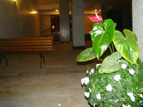 FOTO14 - Apartamento 2 quartos à venda Ipanema, Rio de Janeiro - R$ 910.000 - GA20503 - 15