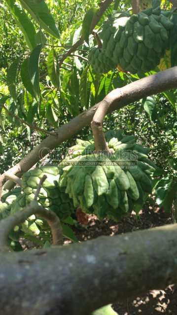 Arvores frutíferas - Casa à venda Rua da Graça,Olaria, Nova Friburgo - R$ 609.000 - GICA50010 - 27