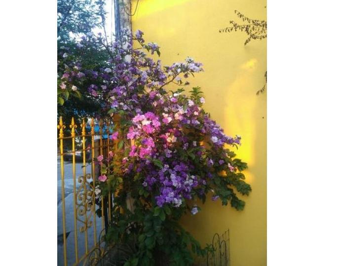 FOTO8 - Casa À Venda - Freguesia (Jacarepaguá) - Rio de Janeiro - RJ - CA0343 - 10